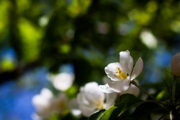 flower spring bokeh nature beijing
