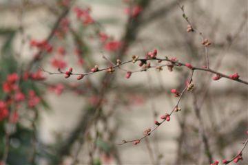 spring flower nature