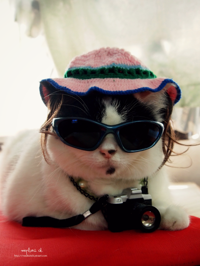 """""""Im rookie photographer and Im very handsome""""  Happy day to you all   #cat #funny #aprilfools #photography #emotion"""