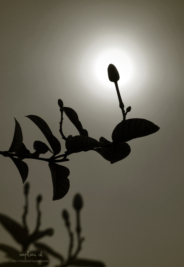 """ Hope ""  for my sweet angel Ute @utes-art   #photography #flower  #silhouette #light #sepia"
