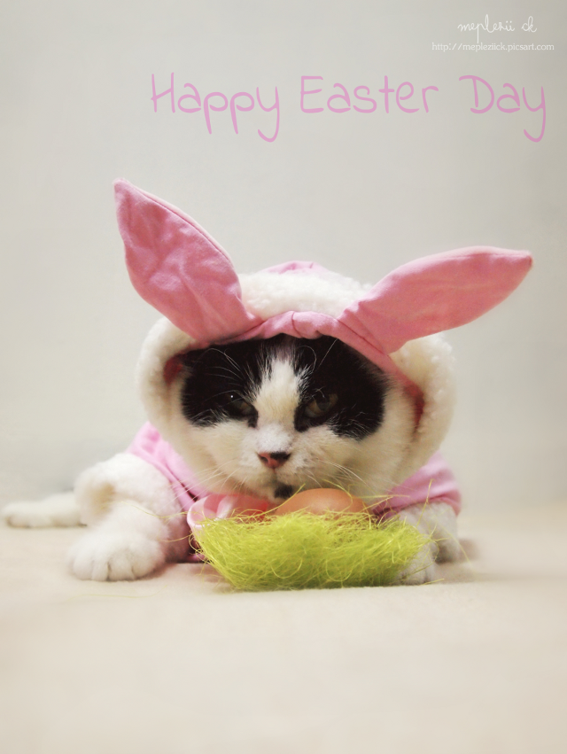 """Happy Easter Day and Happy Sunday to u all""  #photography #cat #easter #egg #rabbit"