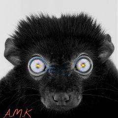 nature eyes effects blackandwhite lensflare