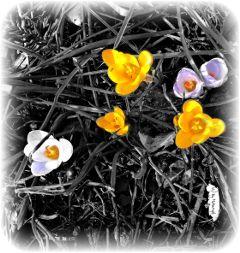 mhnec spring blackandwhite flowers