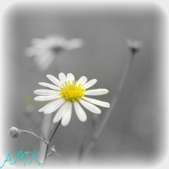 nature flower effects blackandwhite colorful