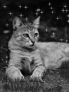 kitten freetoedit