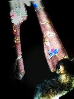 colorful petsandanimals cat photography shadow