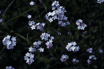 flower spring blue silence poesia