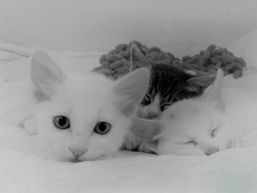Good night my friends😻😻😻 #cute #kitten #brothers #blackandwhite #photography