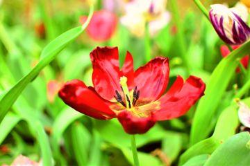 nofilter çiçek flower nature
