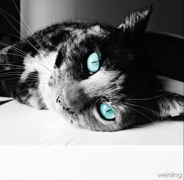 turquoise color images