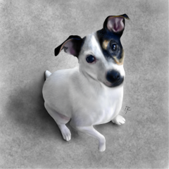 drawing digitaldrawing dog petsandanimals photorealism