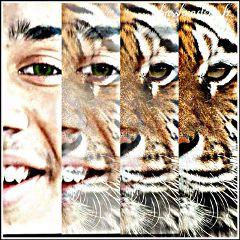 photography emotions hdr wapanimalfaces