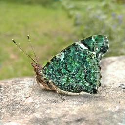 butterfly petsandanimals waphue colorsplash waptiltshift