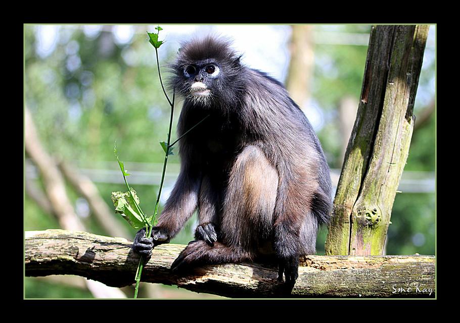 #petsandanimals #nature #animals #zoo #animal