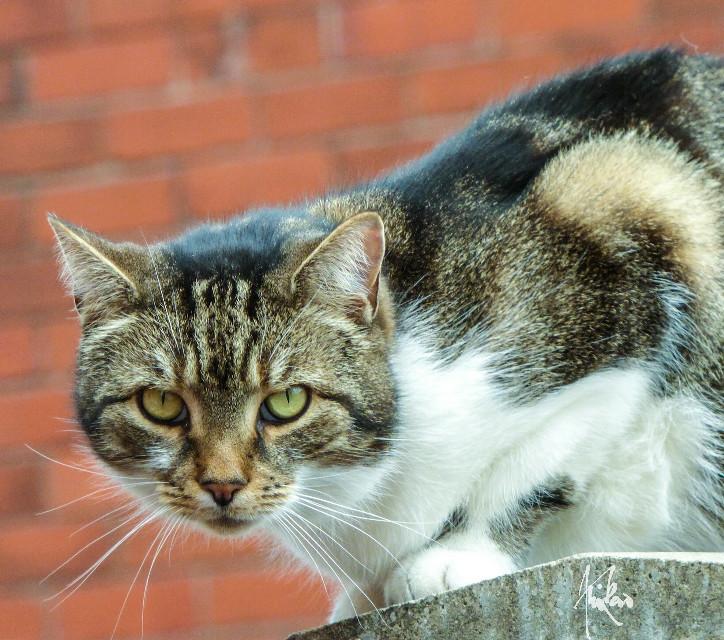 #cat #petsandanimals #whiskers
