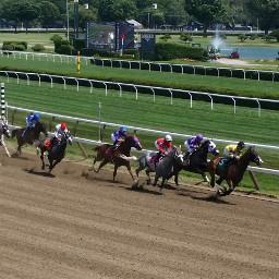 horse race track winning