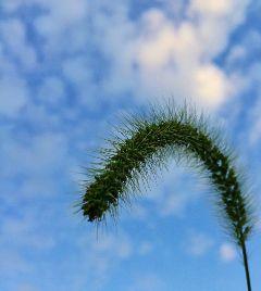 sky clouds weeds