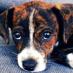 merginglines puppy pets