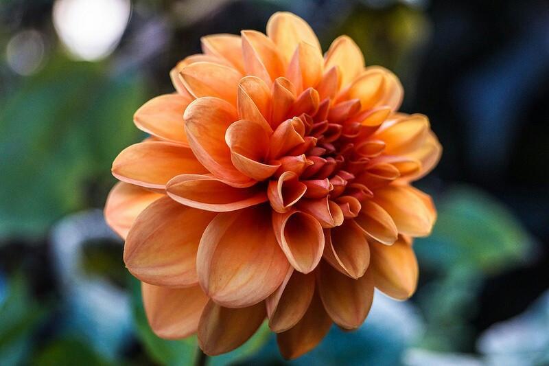 #macro #flower