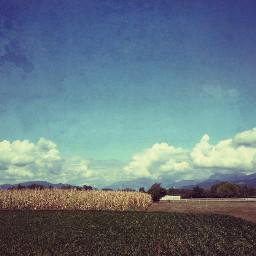 bucolic countryside fields