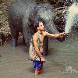 elephanttakeshower jungle