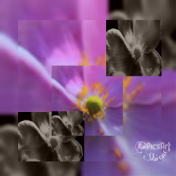squarefit blackandwhite photography flower