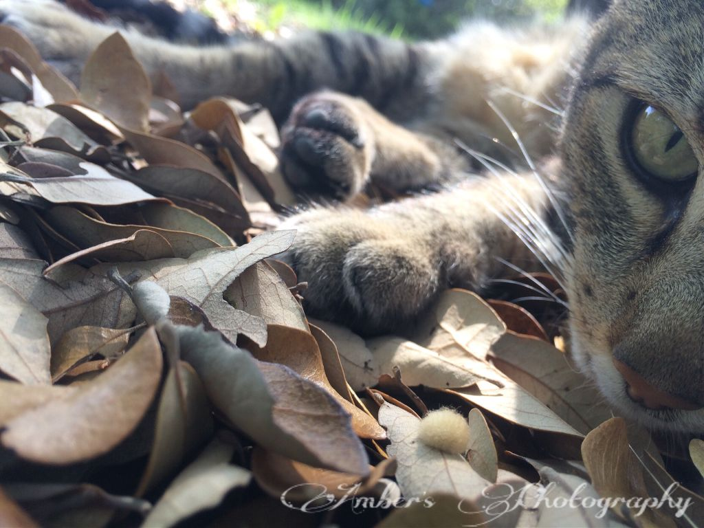Taken with iPhone 5S😊 #cat #love #interesting #autumn #nature #summer #waplookup #yay #cute #follow #like #comment #selfie #repost