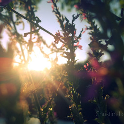 sunset soft summerstory photography colorful