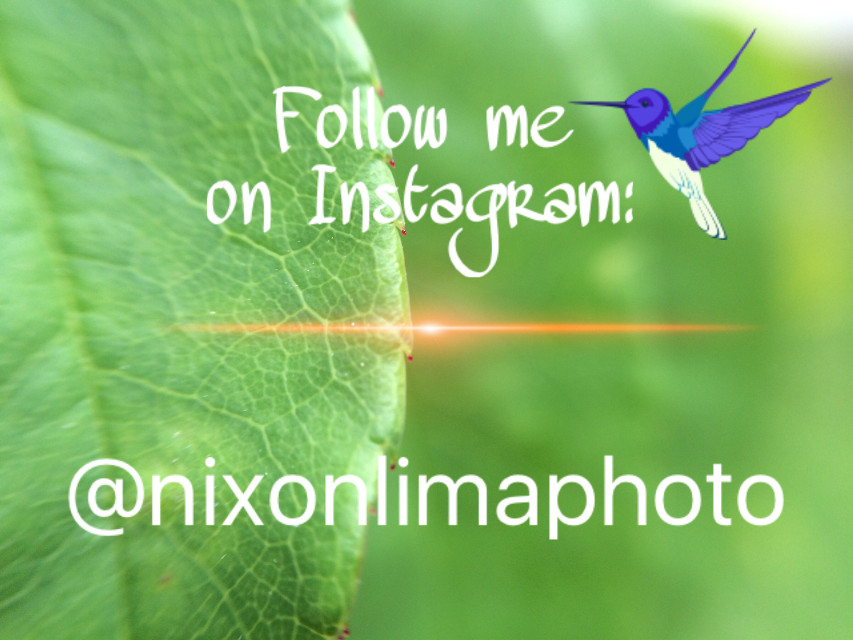 If you are enjoying instagram like me, you can follow me to stay updated with my most recent pictures ;)  #instagram #social #followme #socialnetwork #interesting #nature     #instagram #interesting #photography #socialmedia