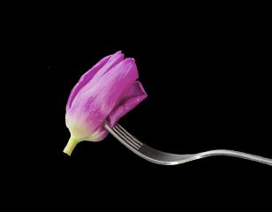 pink fork photography flower abstract