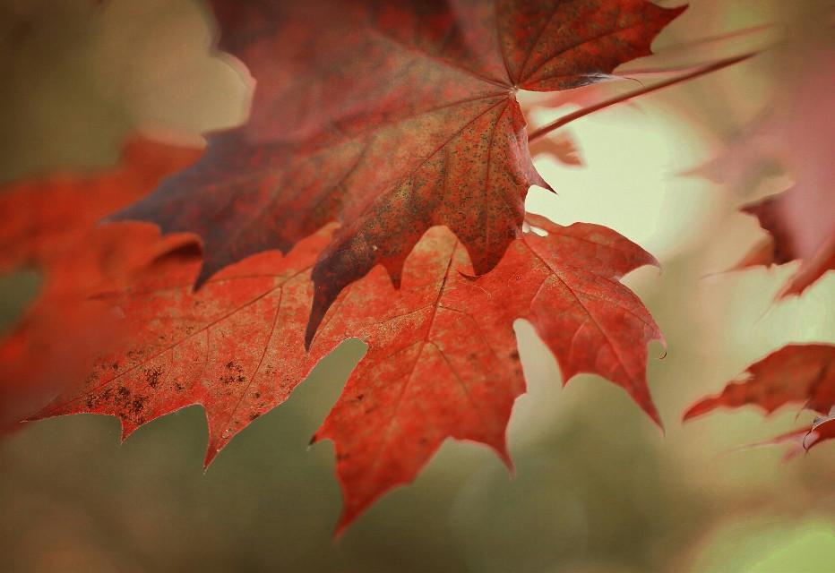 #nature  #autumn #leafs #fall #bokeh