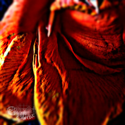 flower nature photography hdr emotions