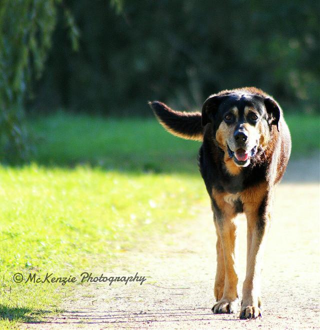 #petsandanimals #photography #dog #olddog #nature #offcenter